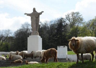 Vie avec le moutons